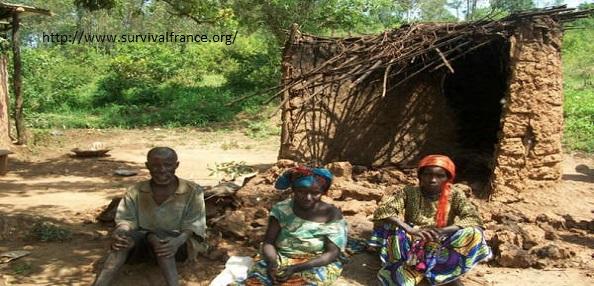 destruction maison pygmées