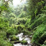 Rwanda/Nyamagabe : Leta ya  FPR yahuguje amasambu abaturage baturiye inkengero z'ishyamba  rya  Nyungwe.