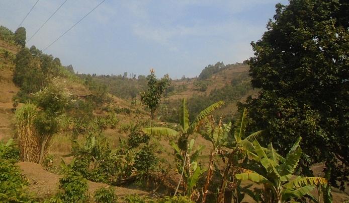 paysage du Buberuka